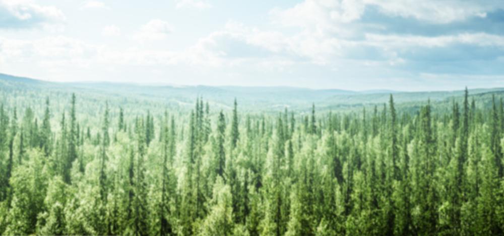 bgforest