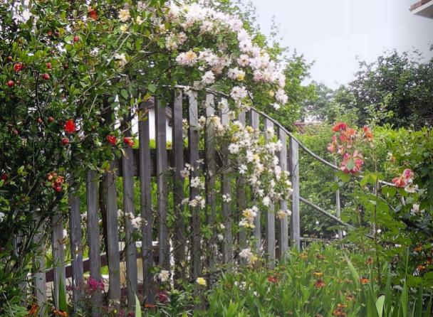 clôtures végétales