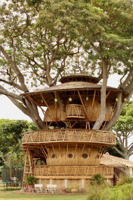 la casa del arbol architecte Jaime Pena colombie