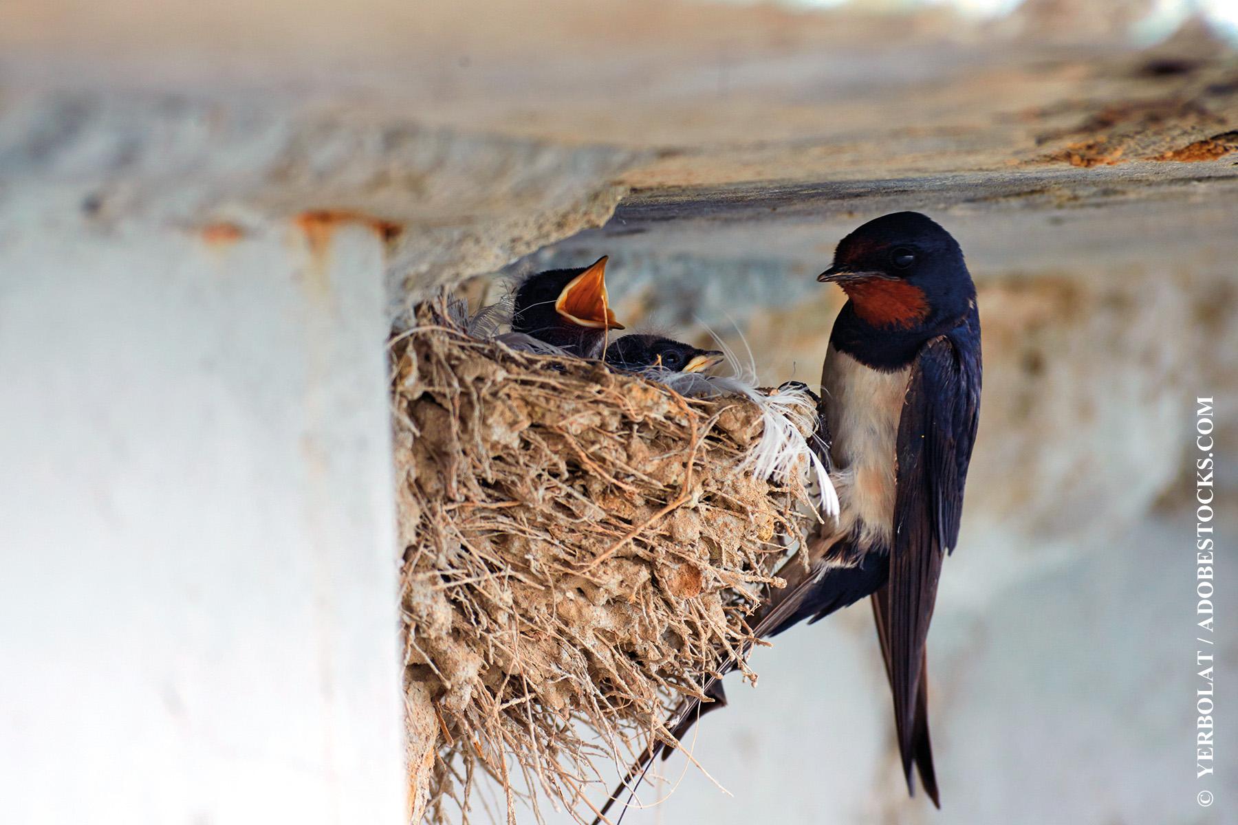 Biodiversité à la maison