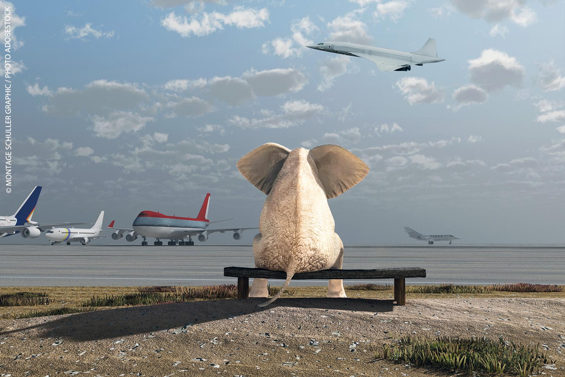 éléphant blanc