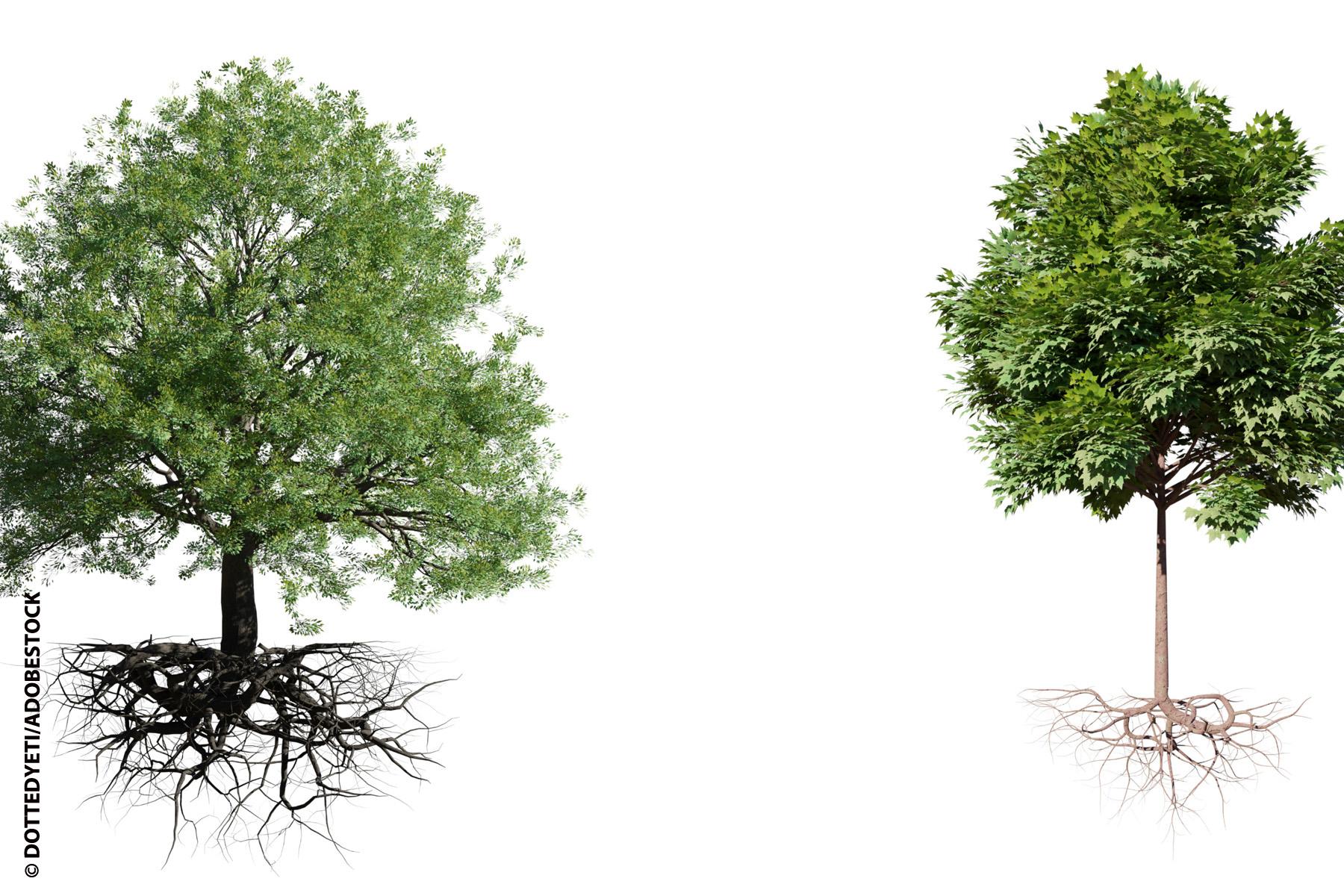penser comme un arbre
